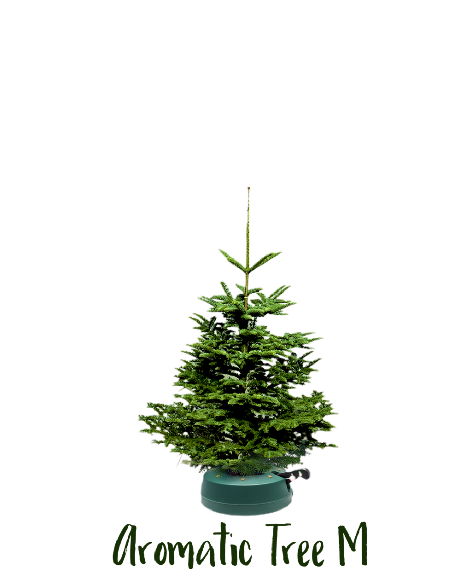 Aromatic Tree M