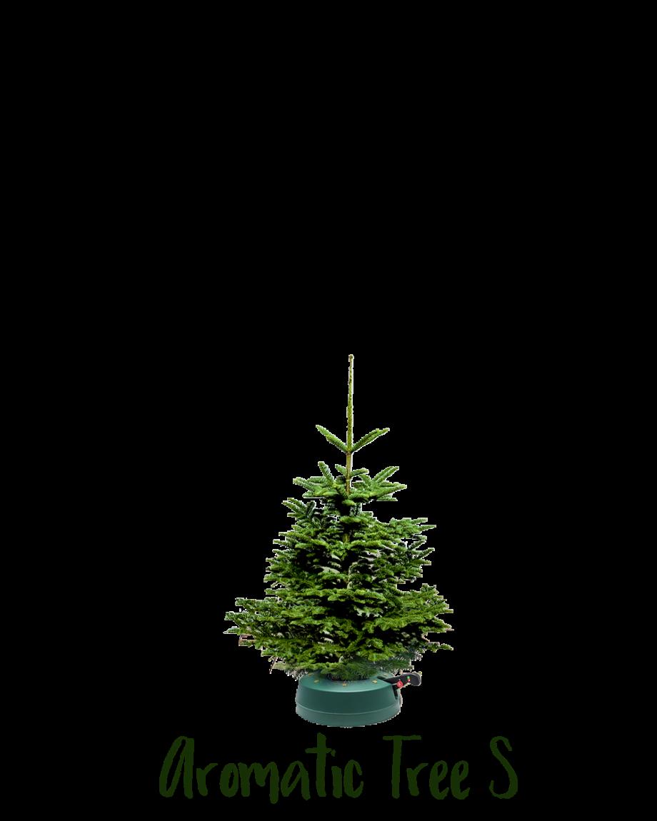 Aromatic Tree S
