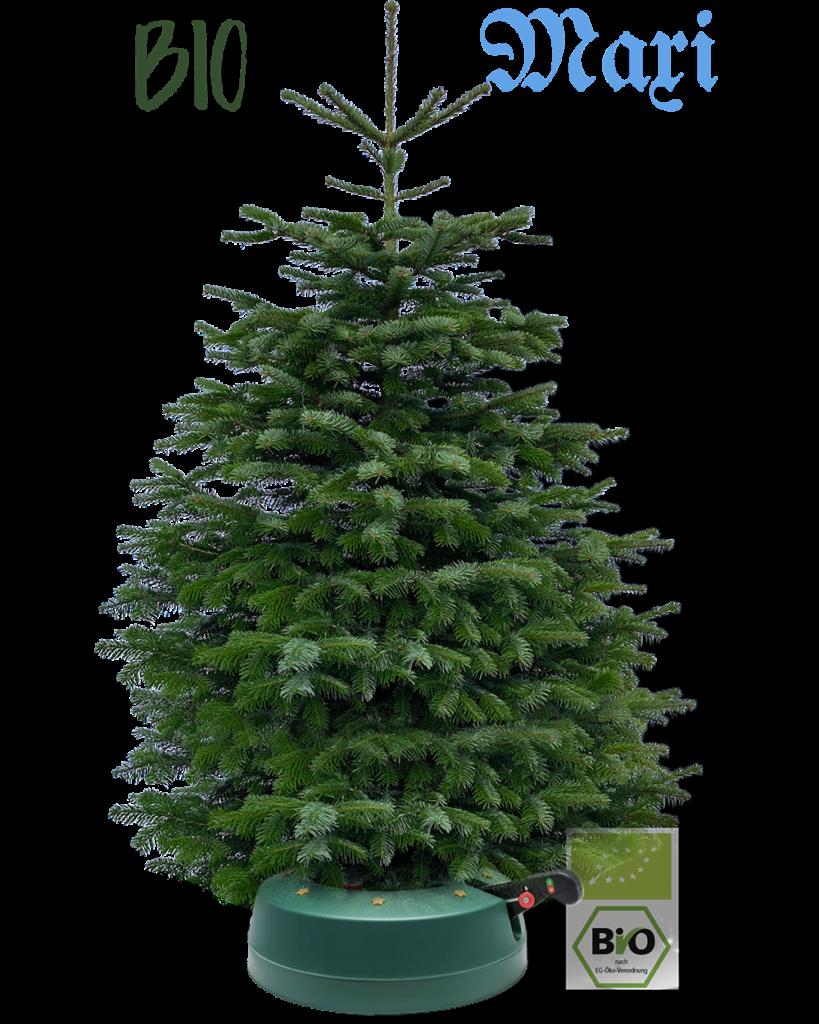 Bio Weihnachtsbaum